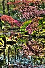 Surreal Mornings (W.R. van Straalen) Tags: japanesegarden morninglight surreal thehague hdr clingendael minolta100mmmacro sonya99