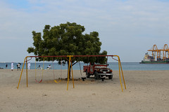 IMG_0033.jpg (svendarfschlag) Tags: family tree beach port jeep uae swing emirates arab emirate unitedarabemirates beachday fujairah khorfakkan  gulfofoman golfvonoman fudschaira chaurfakkan vereinigtenarabischenemiraten chrfakkan