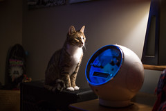 Buster Boots Ponders the Existence of Weltron (ambivalence_uk) Tags: light music cats home cat radio vintage tabby speaker 70s ambience amfm 8track 8trackplayer weltron