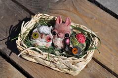 My little ones <3 (maselanka) Tags: art toy oso doll handmade awsome made polar artdoll hande arttoy osopolar