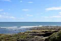 Sea from Rocky Island (DavidWF2009) Tags: sea northumberland seatonsluice rockyisland