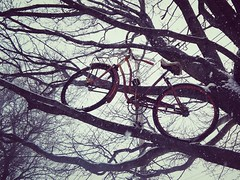 Tree cyclist. (lspisak33) Tags: trees cleveland bikes