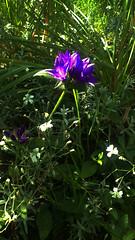 112 (jurinkof) Tags: fleurs blten   kvety kvty