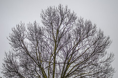 Bare Winter (Bev-lyn) Tags: trees winter cold grey skies