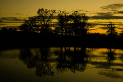 Turn your lights down low (Costigano) Tags: trees sunset sky sunlight lake reflection nature water canon eos scenery sundown outdoor scenic