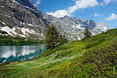 Trbsee (welenna) Tags: alpen alps alpenrose berge blume blue baum natur natural mountains mountain morning switzerland summer snow schnee see schwitzerland sky swiss steine stone view landscape lake light clouds cloud trbsee tree wasserspiegel water wasser himmel hiking serene