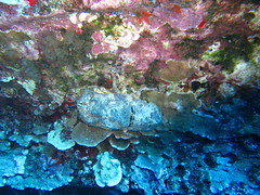 IMG_1417 (Craig from Toon) Tags: scuba maui slipperlobster lanai molokinibackwall