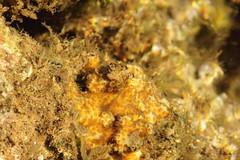 corals 1 (Journey of A Thousand Miles) Tags: hawaii kauai tidepool 2012 poipubeachpark