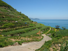Terraces-Path-Daraengi Village-Namhae-South Korea (mikemellinger) Tags: ocean blue nature beauty rural landscape island countryside town scenery asia village pacific path north terraces korea southkorea namhae 남해 daraengi 다랭이마울