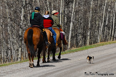 Out for a Ride/Walk DSC_9789 (Ron Kube Photography) Tags: horses dog nikon ride alberta jackrussell southernalberta ruralalberta d300s ronaldok nikond300s ronkubephotography