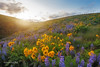 Simple Moments (Vinnyimages) Tags: flowers sunset washington spring moments washingtonstate simple dalles allgoodthings vinnyimages wwwvinnyimagescom