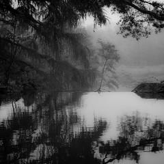 Waterfall Ridge (noahbw) Tags: trees blackandwhite bw mist reflection water monochrome leaves misty fog forest square landscape blackwhite waterfall spring woods nikon chicagobotanicgarden d5000 noahbw