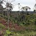 Vegetazione amazzonica