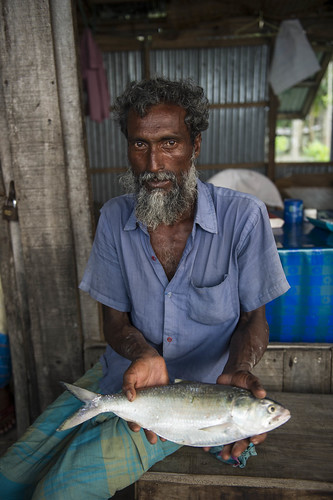 Middleman buying Hilsa at Bhola village, Bangladesh. Photo by Finn Thilsted, 2012.