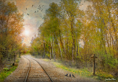Way of cross (Jean-Michel Priaux) Tags: trees mist france tree art nature fog forest train photoshop painting way landscape track artistic dream alsace paysage foret arbre hdr chemin sncf priaux mygearandme ringexcellence flickrstruereflection1 rememberthatmomentlevel1 marckholsheim