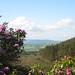Blooming Across Vee Valley