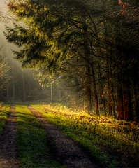 Morning light (Eric Goncalves (lots of catching up to do!!)) Tags: trees sun color tree sunrise landscape gloucestershire forestofdean mfcc thegalaxy ringexcellence dblringexcellence tplringexcellence galleryoffantasticshots eltringexcellence rememberthatmomentlevel4 rememberthatmomentlevel1 rememberthatmomentlevel2 rememberthatmomentlevel3 rememberthatmomentlevel7 rememberthatmomentlevel9 rememberthatmomentlevel5 rememberthatmomentlevel6 rememberthatmomentlevel8 rememberthatmomentlevel10