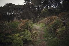 Fern Path (dan_walk) Tags: brown green outside outdoors coast bush time hiking path australia victoria adventure explore coastal vegetation cape ferns pathway bridgewater exploremore