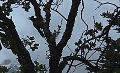 cureuil (bulbocode909) Tags: nature arbres animaux cureuils