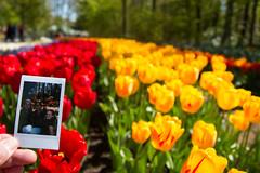 IMG_1492-Evy Kras, Keukenhof.jpg (markkras-fotografie) Tags: tulipa keukenhof tulp evykras