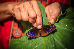 Taiwan-121113-229 (Kelly Cheng) Tags: travel color colour green tourism nature animals horizontal fauna butterfly daylight colorful asia day taiwan vivid colourful traveldestinations  northeastasia