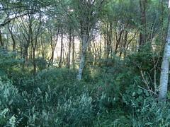 Jungle (Phil Nosler) Tags: jungle forest trees bush whacking bushwhacking hiking offtrail oregon