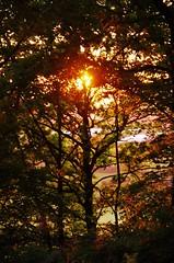 Backlit (Sundornvic) Tags: trees light sunset sky sun silhouette woods shine shropshire hill haughmond