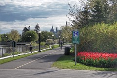Ottawa River Parkway, your path to downtown. (beyondhue) Tags: morning red ontario canada west tower river island spring downtown peace cyclist tulips path ottawa hill sunny parliament victoria parkway recreation beyondhue