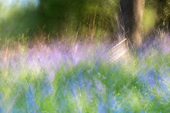 Spring in Scotland..... (Domly1) Tags: painterly lightpainting me bluebells woods impressionism watercolour 06 icm multipleexposures ndfilter may16 25105mm