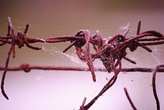 DSC_0629 (Abbruxiau) Tags: macro passione foto ragnatela web filo spinato divieto nurallao nuradha sardegna closeup