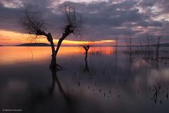 Trees (Massimo_Discepoli) Tags: trees sunset water long exposure trasimeno