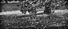 a more fairer world ... (sermatimati) Tags: world poverty red bw white black rome roma tree green nature photography justice earth fame natura solidarity huge production produce gigantic consumismo consumerism photographing equality giustizia povert selfie mondo fairness albicocche uguaglianza spreco