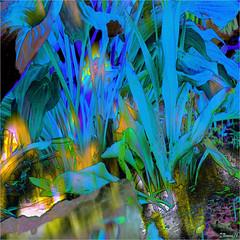 Garden Blues (Tim Noonan) Tags: blue flower garden turquoise