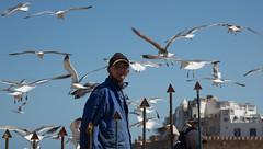 Natalie_Chan_Photography-7 (Natalie Chan Photography) Tags: africa portrait seagulls seaside seagull morroco maroc essaouira