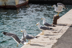 160403_lan_her_set_2924.jpg (f.chabardes) Tags: france languedoc ste vieuxport hrault avril 2016 2t