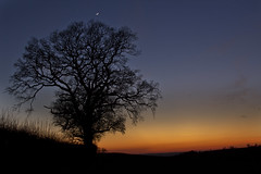 After Sunset Moon takes over (Si Photography) Tags: sunset red sky cloud sun moon tree simon set photography star evening bush dusk branches si hedge dorset planet jupiter shaftesbury maidment