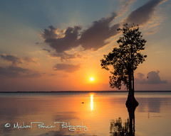 Old Fashion Florida Sunset on Blue Cypress Lake (Michael Pancier Photography) Tags: wild nature birds florida birding lakes it keep cypresstrees osprey verobeach centralflorida oldflorida commercialphotography baldcypress stluciecounty naturephotographer indianrivercounty michaelpancierphotography landscapephotographer fineartphotographer bluecypresslake michaelapancier floridalakes ospreynests canoneos5dmarkiii 5dmarkiii