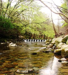 Stepping Stones, Tollymore Forest (kittykennedy) Tags: river northernireland steppingstones tollymore