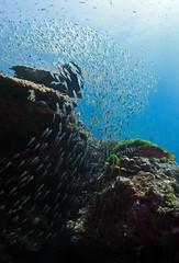 baitstream8893 (gerb) Tags: school fish topv111 underwater scuba fisheye loveit reef tvp similanislands aquatica baitfish d7000 sigma1017fe