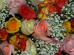ROSES FOR MY FLICKR FRIENDS (Explore April 7, 2012 #496) (Irene, W. Van. BC) Tags: flowers beautifulflowers colourfulflowers nature beautifulnature blossoms blooms pink rose roses allroses colourfulroses beautifulroses explore