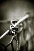 wire / 刺钢丝 (aelena) Tags: metal wire iron 铁 线 金属 单色画 淡色照片