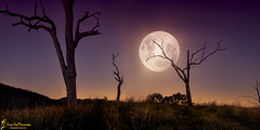 Moonlight on my Horizons (southern_skies) Tags: trees moon mountains silhouette night myplace blend paddock