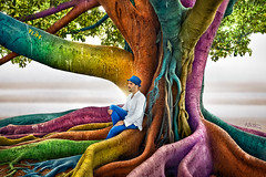 Just Dreaming (Ben Heine) Tags: life sea inspiration selfportrait man tree art home nature ecology hat leaves photography freedom seaside amazing blood sevilla spain colorful artist poem earth couleurs live air magic tr dream roots peterpan seville boom fresh oxygen espana exotic evergreen poet rbol coloring tropical trunk heights ideas albero arbre strom baum sap  timburton cocoon origins tronc banyantree racines moretonbayfig kleur aa   drzewo stimulation sve rainbowtree arbore exotism ficusmacrophylla selectivecolors benheine justdreaming  kleurel