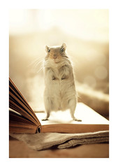 Do you mind reading me a book? (hyouro) Tags: animal animals gerbil rodent focus soft mice gerbils mices