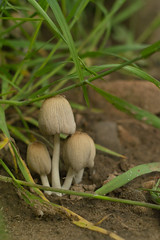 mushrooms (chaoskatenkosmos) Tags: mushrooms sigma pilze helios foveon 442 sd14