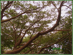 3. IN-MH-MUM-SNP - Park Photography (1) (Kquester) Tags: park national gandhi sanjay