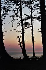 Oregon 6A_0065 (alyssa's gallery) Tags: oregon oregoncoast oswaldwest shortsands