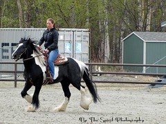 Blackjack - Gypsy Vanner - Jayme Nail sm (BarbieW) Tags: show horse beautiful alaska fairgrounds tennessee barbie palmer parade curly walker breeding quarter arabian wagner shetland stallion pinto friesian bythespiritphotography