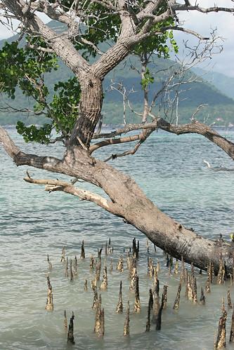 Mangrove North 2