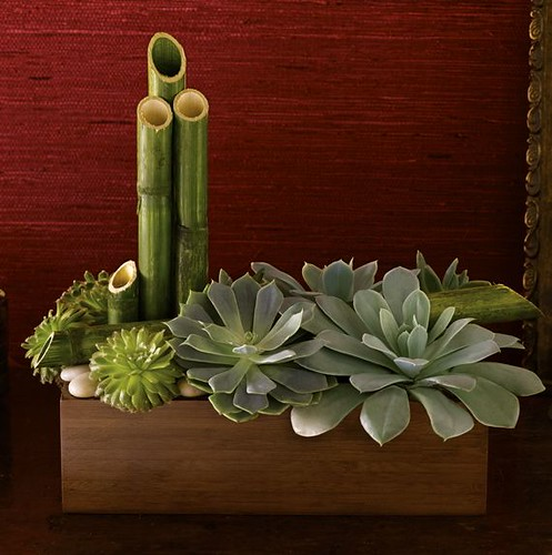 Succulents and Bamboo